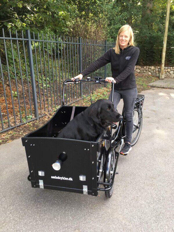 El lådcykel til hund